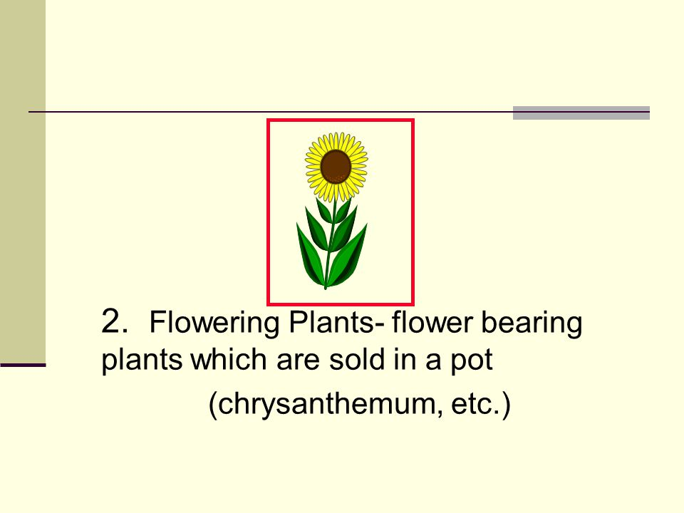 2. Flowering Plants- flower bearing plants which are sold in a pot (chrysanthemum, etc.)