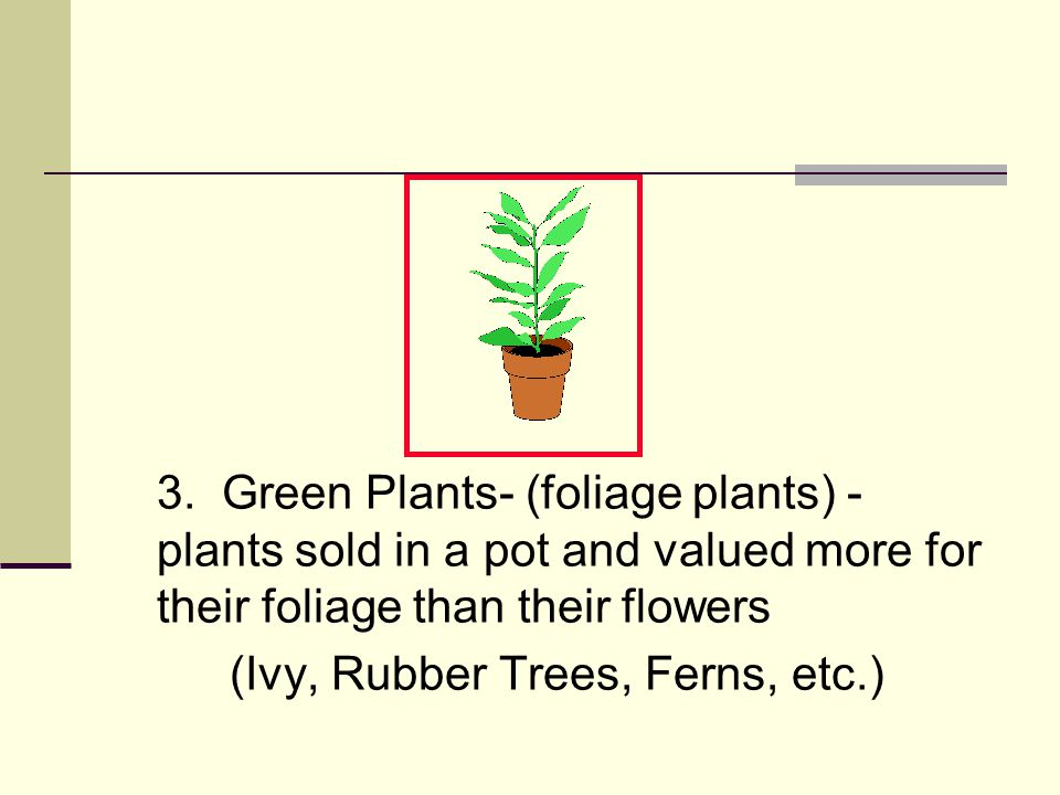 3. Green Plants- (foliage plants) - plants sold in a pot and valued more for their foliage than their flowers (Ivy, Rubber Trees, Ferns, etc.)