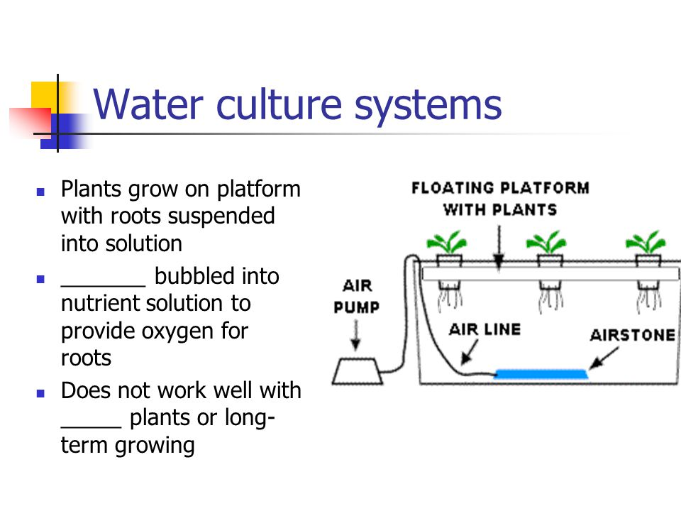 Water culture systems Plants grow on platform with roots suspended into solution _______ bubbled into nutrient solution to provide oxygen for roots Do