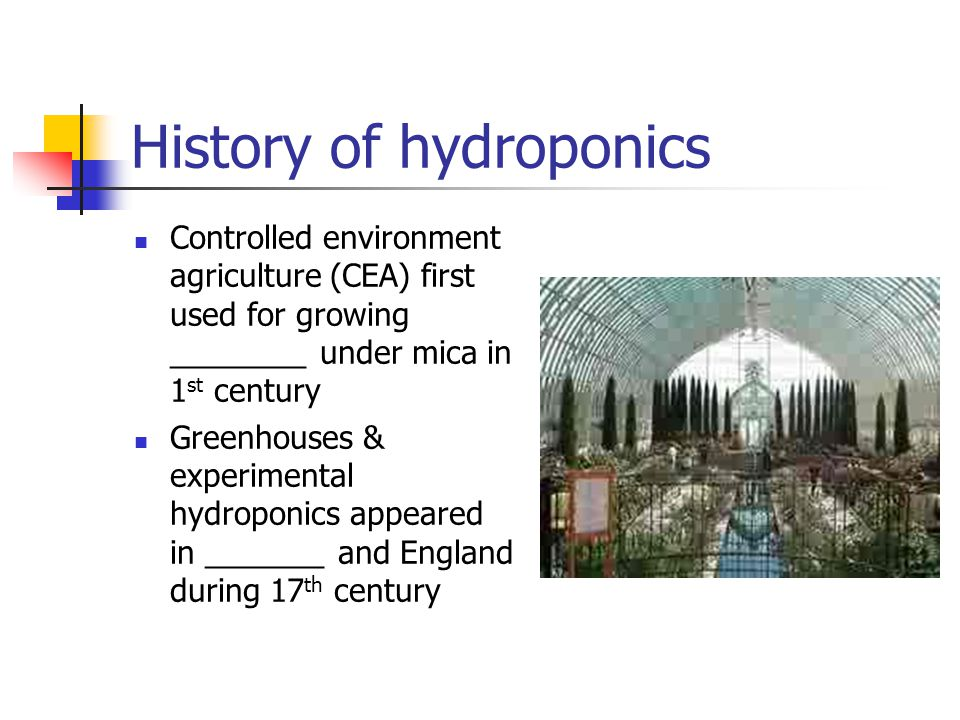 History of hydroponics Controlled environment agriculture (CEA) first used for growing ________ under mica in 1 st century Greenhouses & experimental