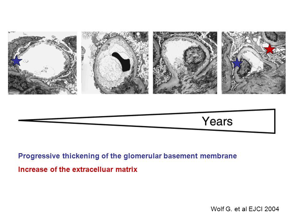 Progressive thickening of the glomerular basement membrane Increase of the extracelluar matrix Wolf G. et al EJCI 2004
