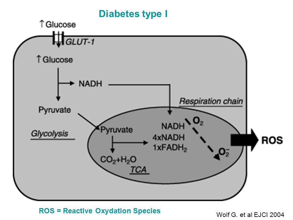 ROS = Reactive Oxydation Species Diabetes type I Wolf G. et al EJCI 2004