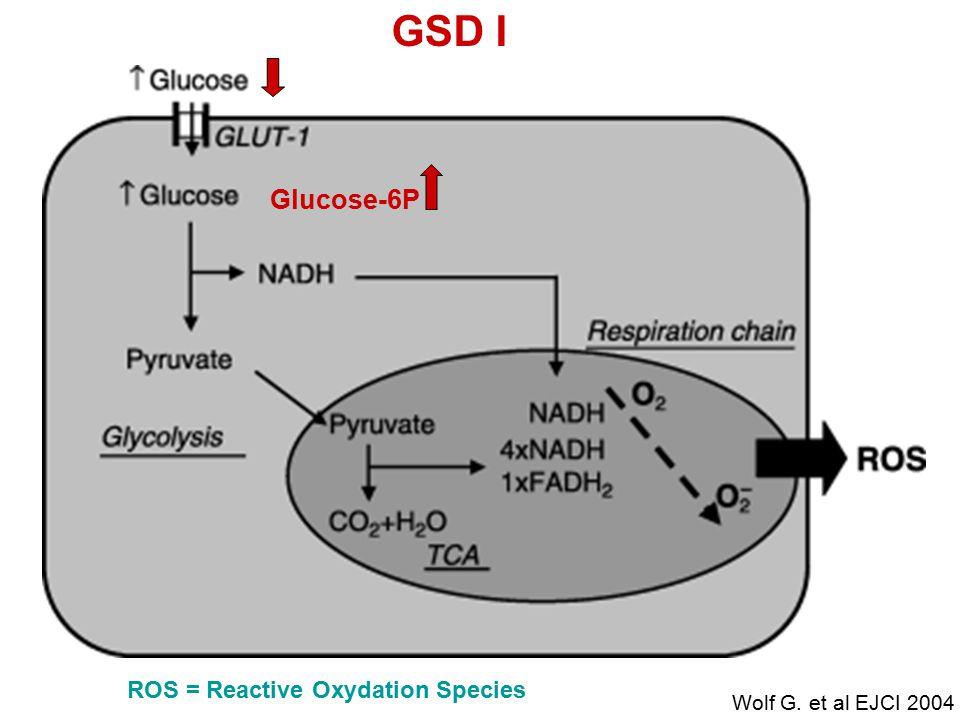 ROS = Reactive Oxydation Species GSD I Glucose-6P Wolf G. et al EJCI 2004