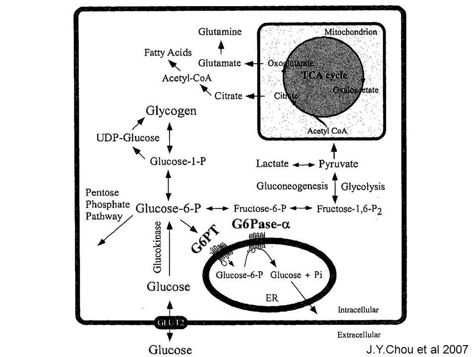 GSD I Tubular dysfunction Proximal: calcium retinol binding protein N-acetyl glucosamine citrate increased Increased decreased Lee P et al 1995, Weinstein DA et al 2001