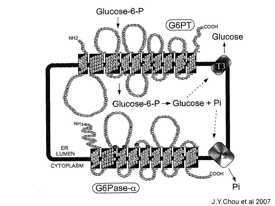 microalbuminuria and proteinuria Rake JP et al EJP 2002