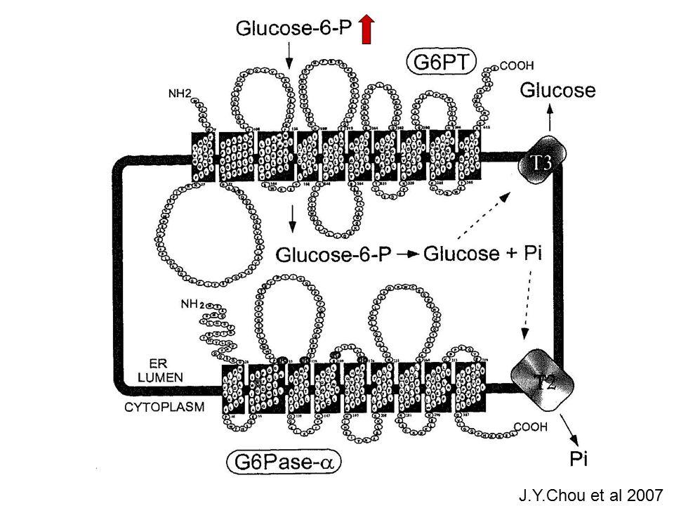 GSD I Glucose-6P