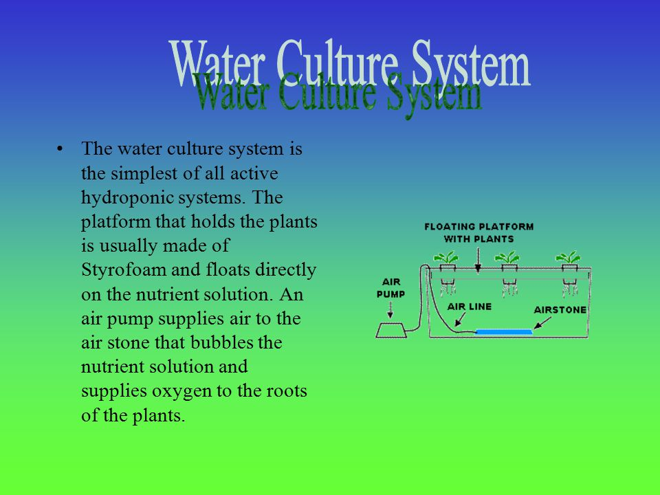 The water culture system is the simplest of all active hydroponic systems.
