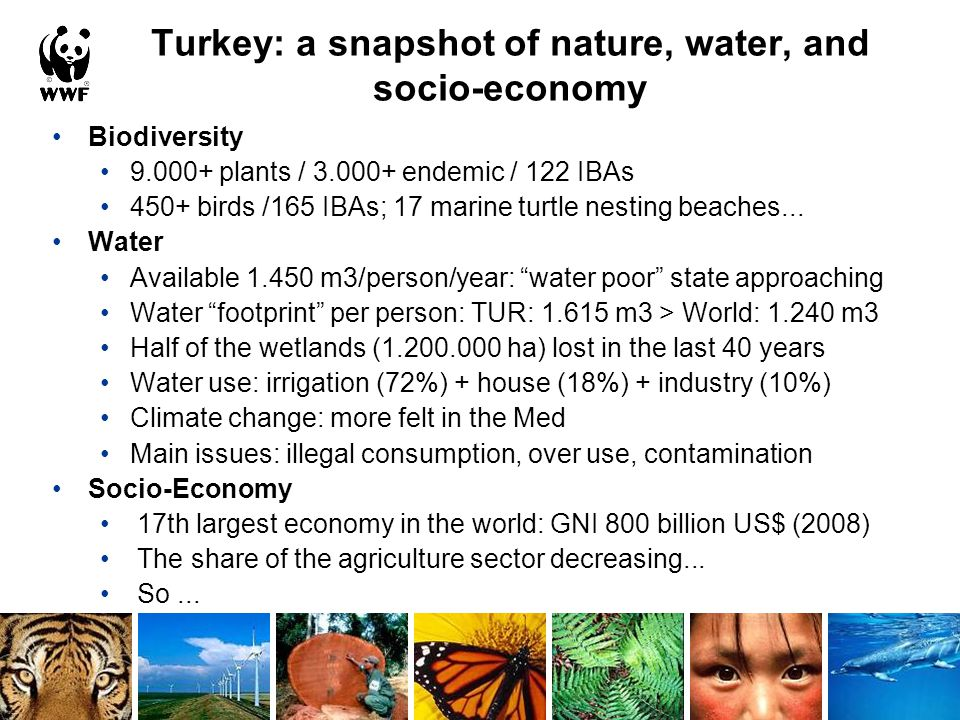 Biodiversity 9.000+ plants / 3.000+ endemic / 122 IBAs 450+ birds /165 IBAs; 17 marine turtle nesting beaches...