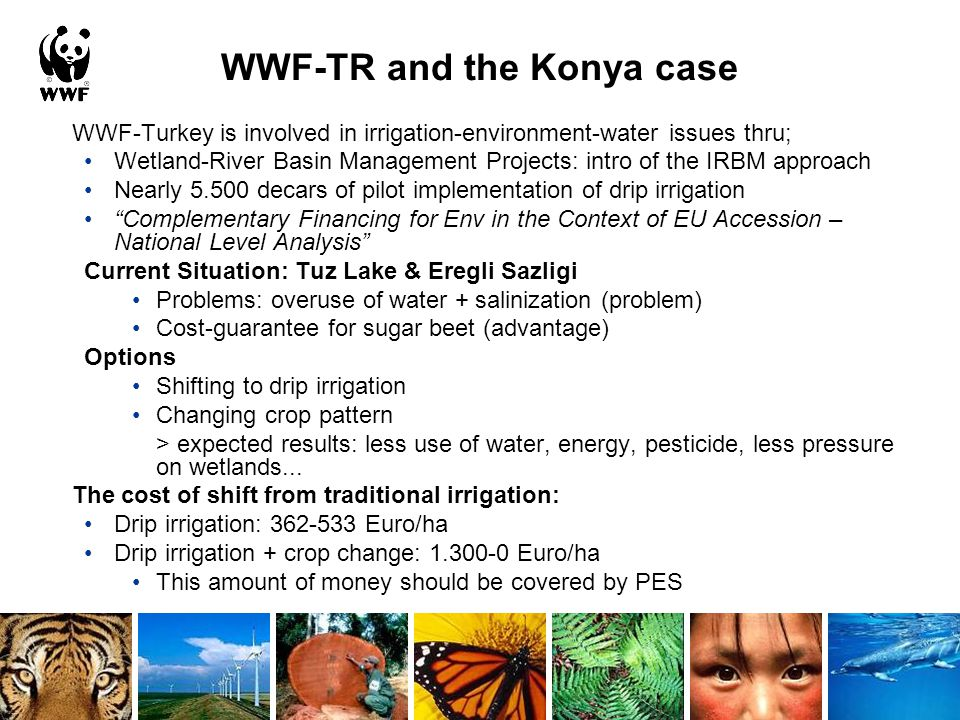 WWF-TR and the Konya case WWF-Turkey is involved in irrigation-environment-water issues thru; Wetland-River Basin Management Projects: intro of the IRBM approach Nearly 5.500 decars of pilot implementation of drip irrigation Complementary Financing for Env in the Context of EU Accession – National Level Analysis Current Situation: Tuz Lake & Eregli Sazligi Problems: overuse of water + salinization (problem) Cost-guarantee for sugar beet (advantage) Options Shifting to drip irrigation Changing crop pattern > expected results: less use of water, energy, pesticide, less pressure on wetlands...