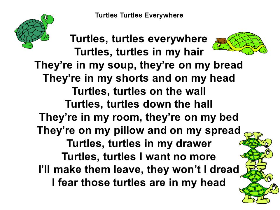 Turtles, turtles everywhere Turtles, turtles in my hair They're in my soup, they're on my bread They're in my shorts and on my head Turtles, turtles on the wall Turtles, turtles down the hall They're in my room, they're on my bed They're on my pillow and on my spread Turtles, turtles in my drawer Turtles, turtles I want no more I'll make them leave, they won't I dread I fear those turtles are in my head Turtles Turtles Everywhere