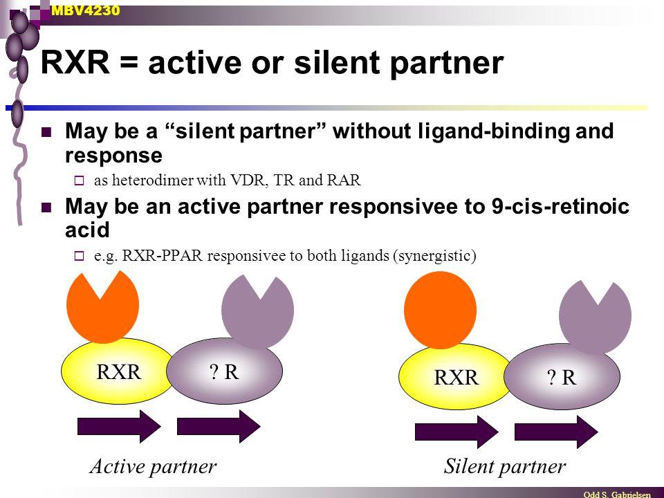 "MBV4230 Odd S. Gabrielsen RXR? RRXR? R Active partnerSilent partner RXR = active or silent partner May be a ""silent partner"" without ligand-binding an"