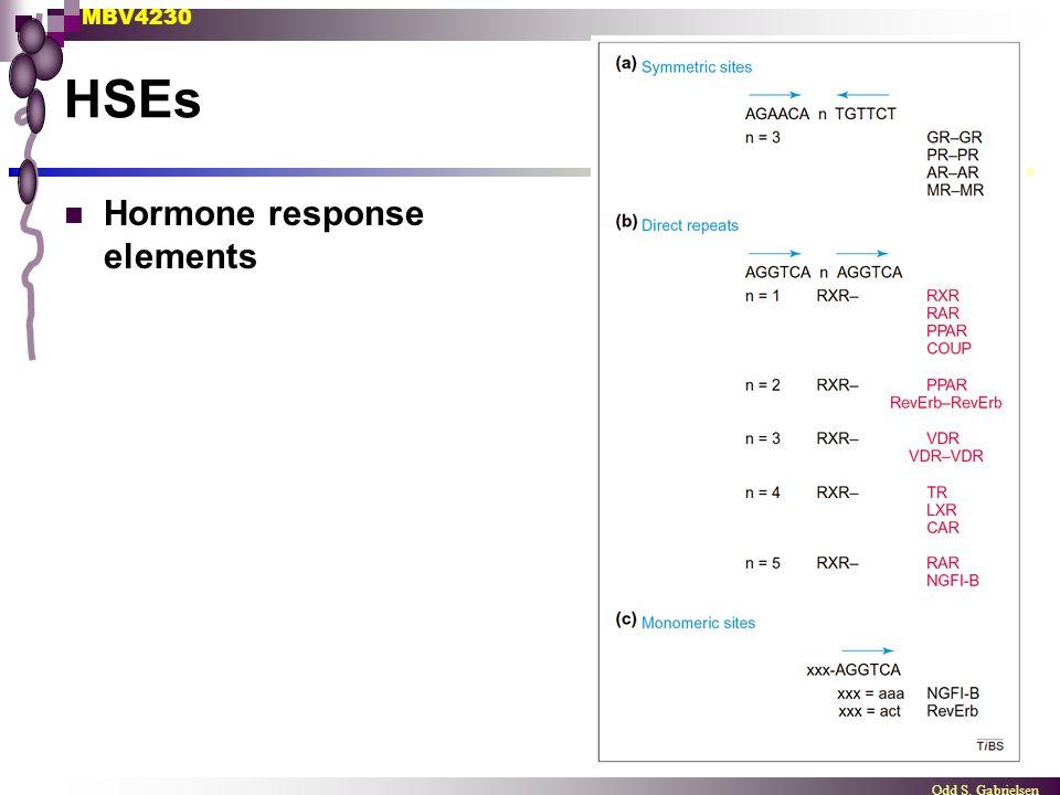 MBV4230 Odd S. Gabrielsen HSEs Hormone response elements
