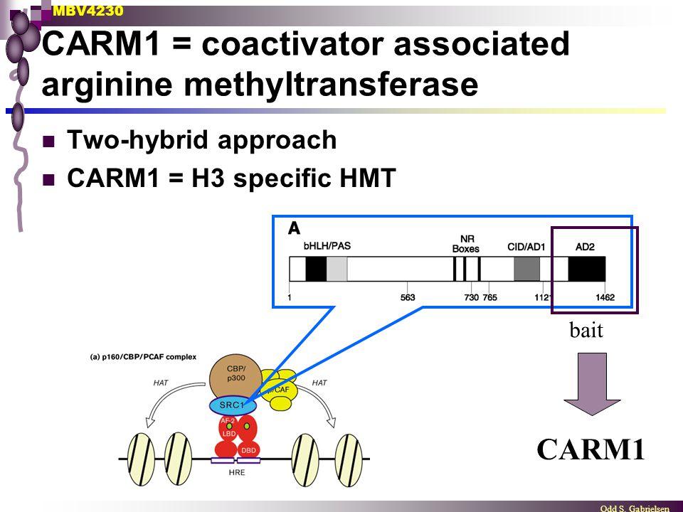 MBV4230 Odd S. Gabrielsen CARM1 = coactivator associated arginine methyltransferase Two-hybrid approach CARM1 = H3 specific HMT bait CARM1