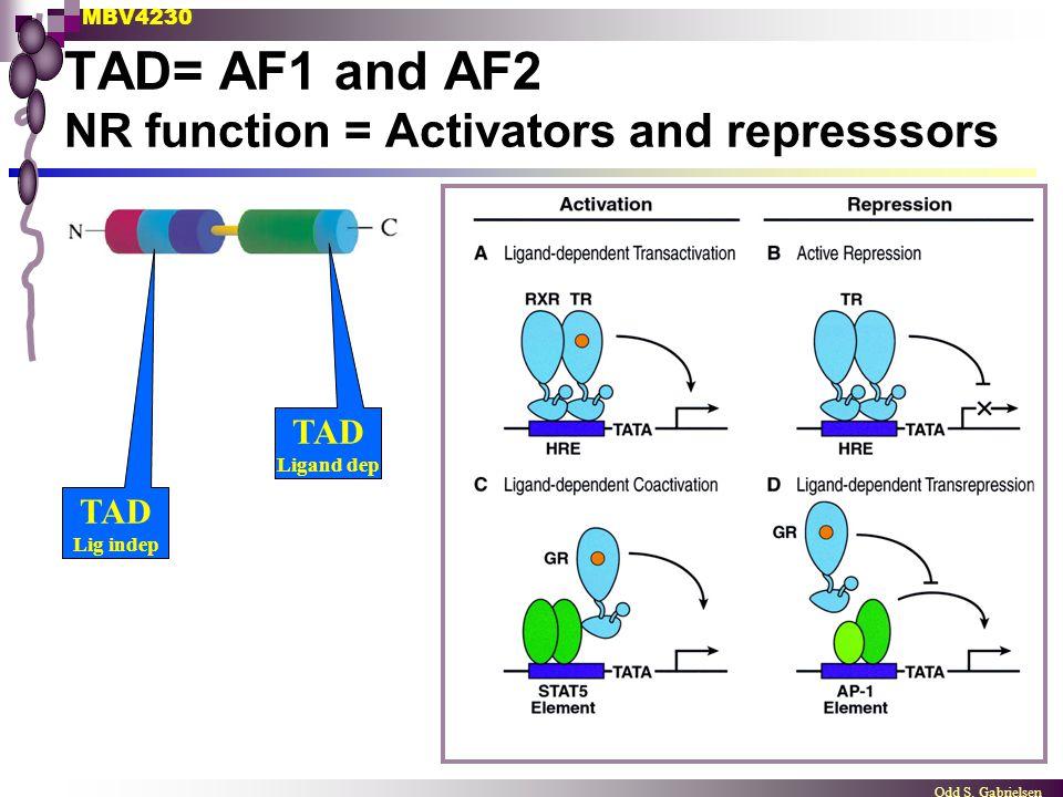 MBV4230 Odd S. Gabrielsen TAD= AF1 and AF2 NR function = Activators and represssors TAD Ligand dep TAD Lig indep