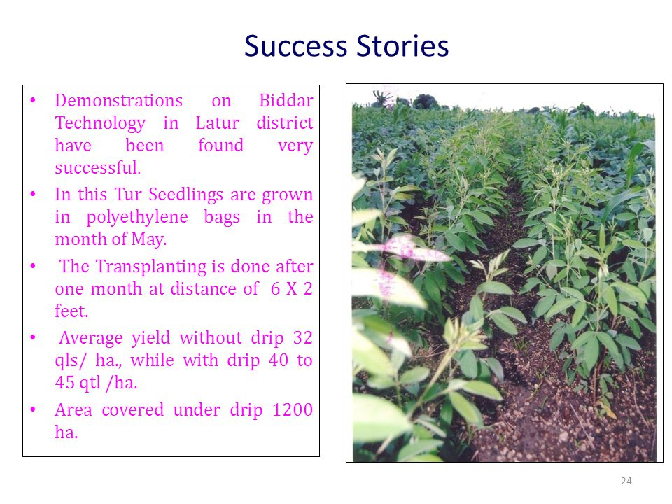 Success Stories Demonstrations on Biddar Technology in Latur district have been found very successful. In this Tur Seedlings are grown in polyethylene