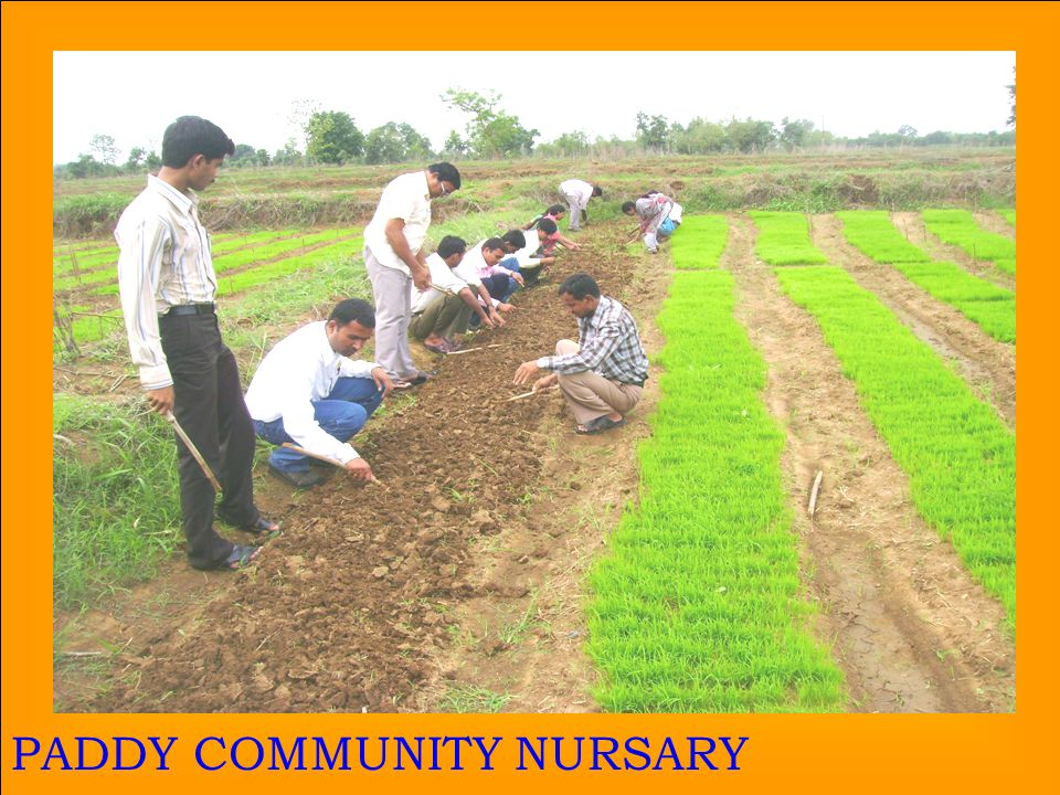 27 PADDY COMMUNITY NURSARY