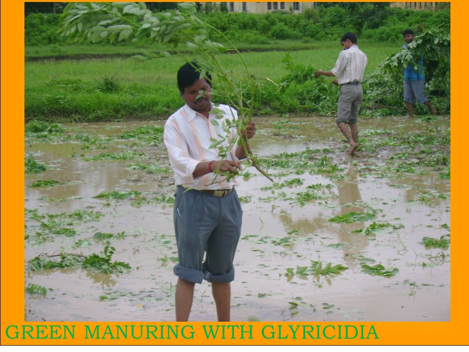 28 GREEN MANURING WITH GLYRICIDIA