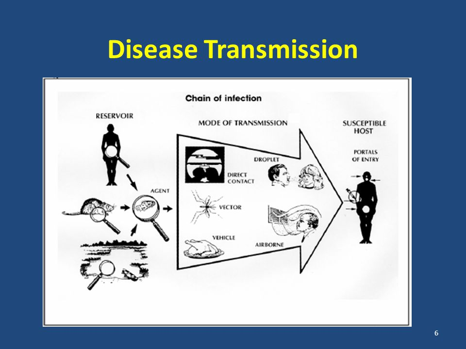 Mode of Transmission RouteExampleDisease Direct contactKissing, sexual contact, skin-to-skin contactSTDs, skin infections, scabies DropletOrganism on large respiratory droplets that people sneeze, cough, drip, or exhale.