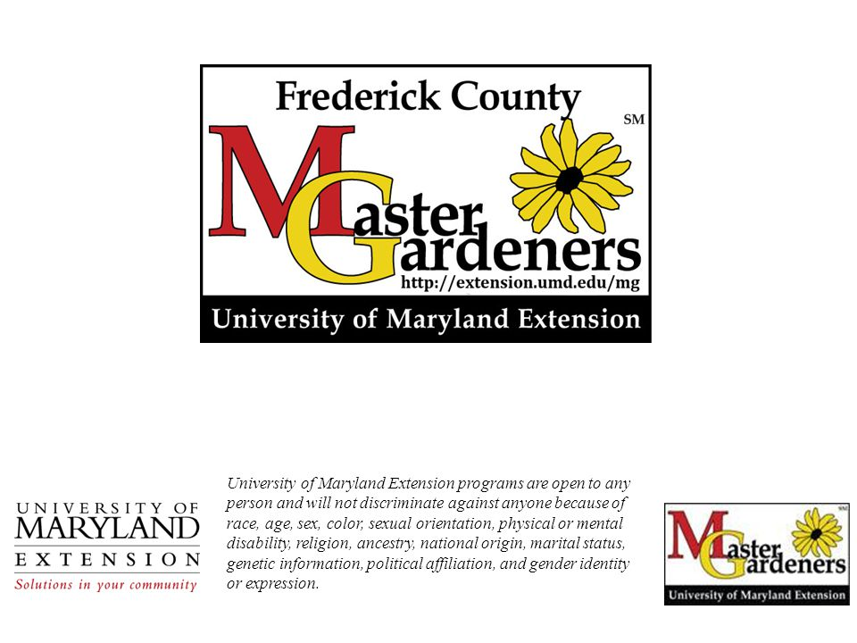 University of Maryland Extension programs are open to any person and will not discriminate against anyone because of race, age, sex, color, sexual ori