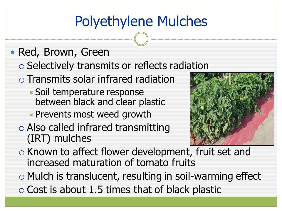 Polyethylene Mulches Red, Brown, Green  Selectively transmits or reflects radiation  Transmits solar infrared radiation  Soil temperature response