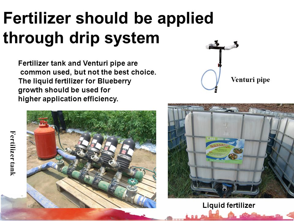 Fertilizer should be applied through drip system Fertilizer tank and Venturi pipe are common used, but not the best choice. The liquid fertilizer for