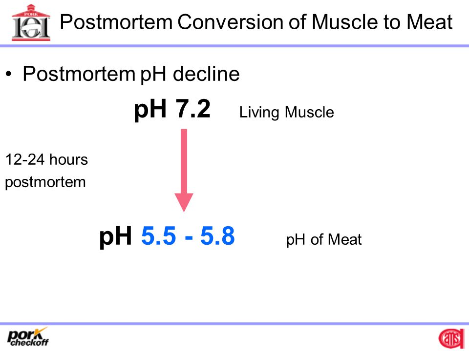 Postmortem Conversion of Muscle to Meat Postmortem pH decline pH 7.2 Living Muscle 12-24 hours postmortem pH 5.5 - 5.8 pH of Meat