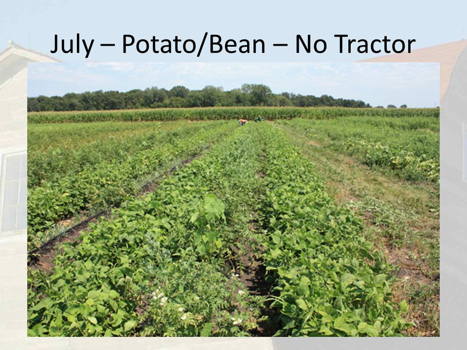 July – Potato/Bean – No Tractor