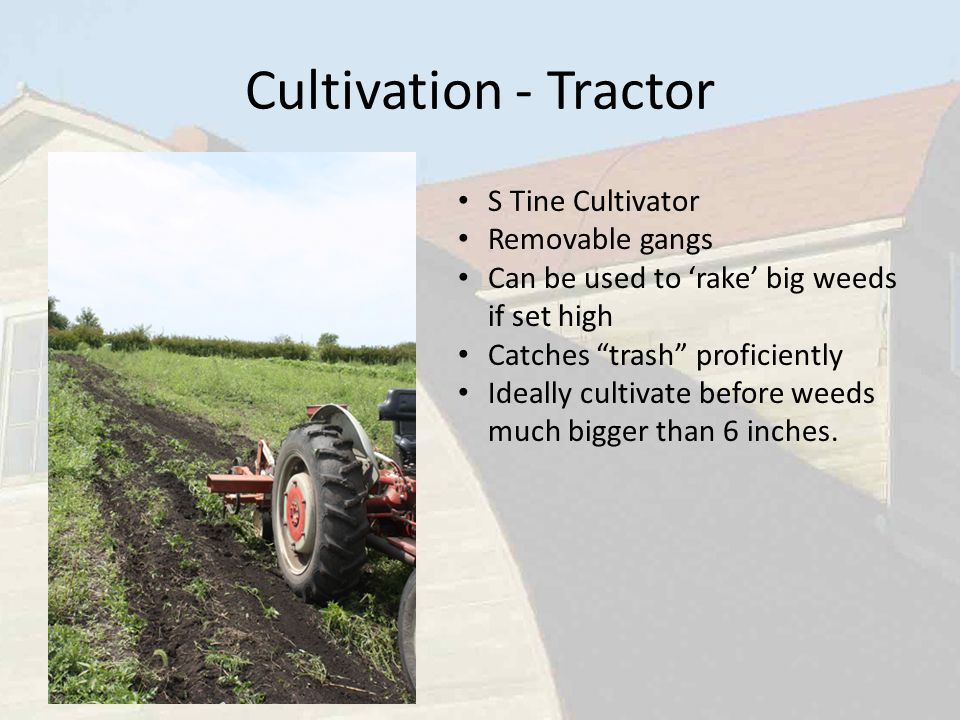 S Tine Cultivator Removable gangs Can be used to 'rake' big weeds if set high Catches trash proficiently Ideally cultivate before weeds much bigger than 6 inches.