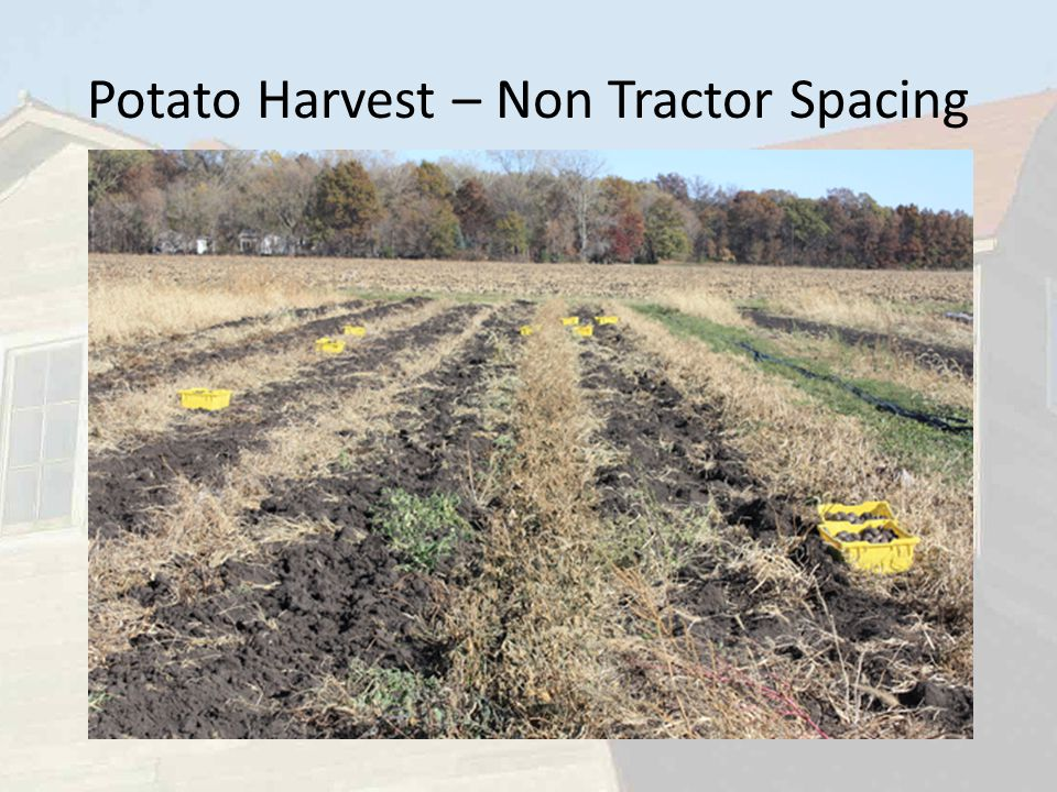 Potato Harvest – Non Tractor Spacing