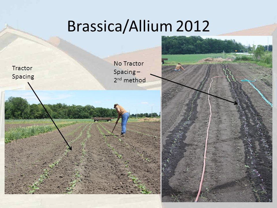 Brassica/Allium 2012 Tractor Spacing No Tractor Spacing – 2 nd method