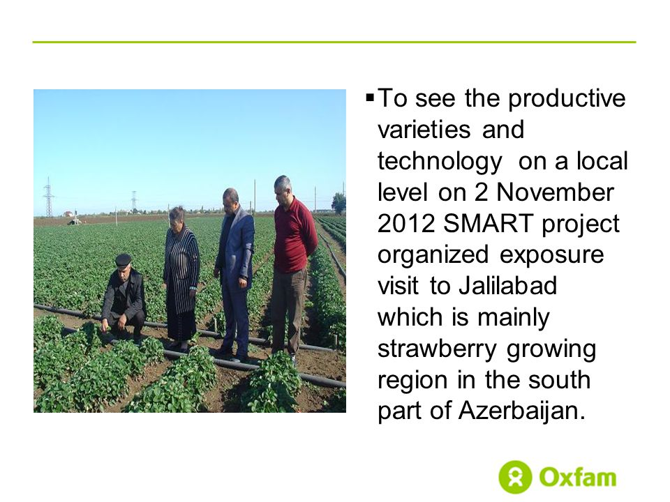  To see the productive varieties and technology on a local level on 2 November 2012 SMART project organized exposure visit to Jalilabad which is mainly strawberry growing region in the south part of Azerbaijan.