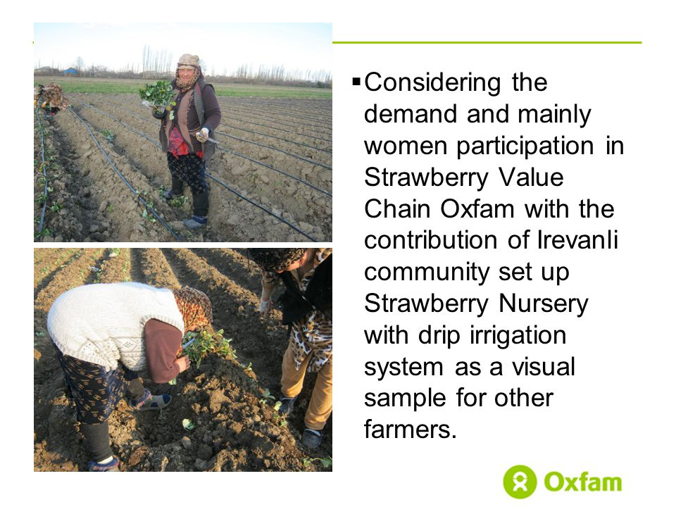  Considering the demand and mainly women participation in Strawberry Value Chain Oxfam with the contribution of Irevanli community set up Strawberry Nursery with drip irrigation system as a visual sample for other farmers.