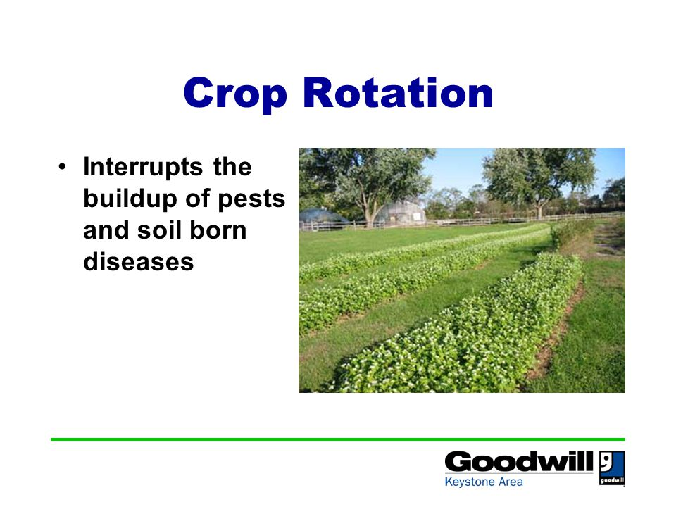 Crop Rotation Interrupts the buildup of pests and soil born diseases