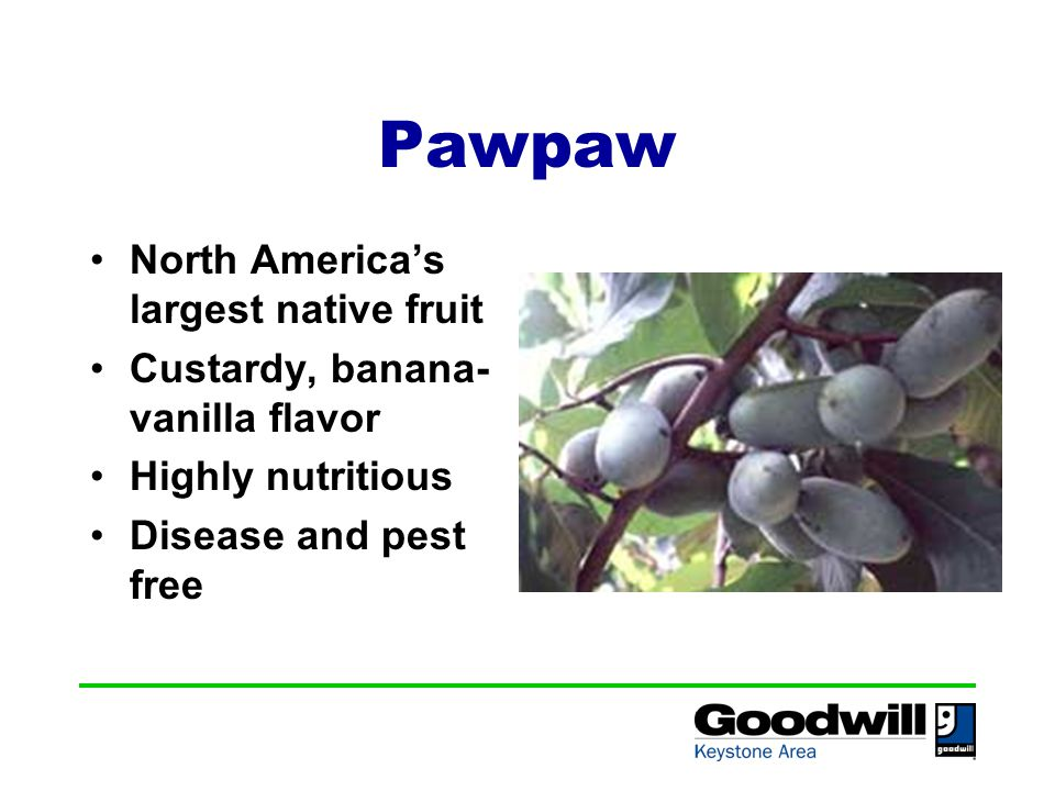 Pawpaw North America's largest native fruit Custardy, banana- vanilla flavor Highly nutritious Disease and pest free