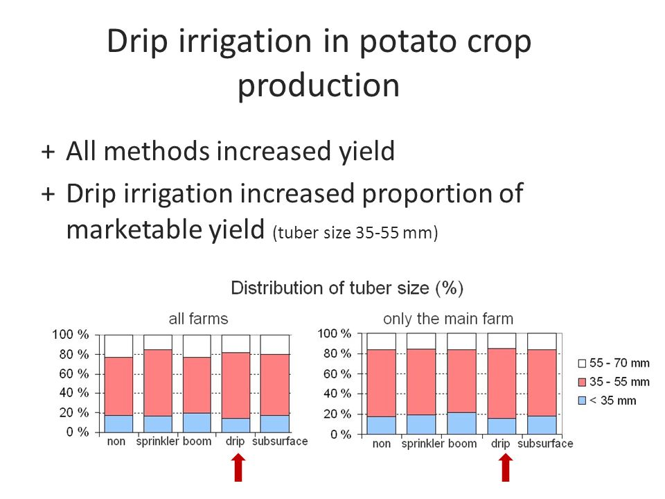 Drip irrigation in potato crop production +All methods increased yield +Drip irrigation increased proportion of marketable yield (tuber size 35-55 mm)