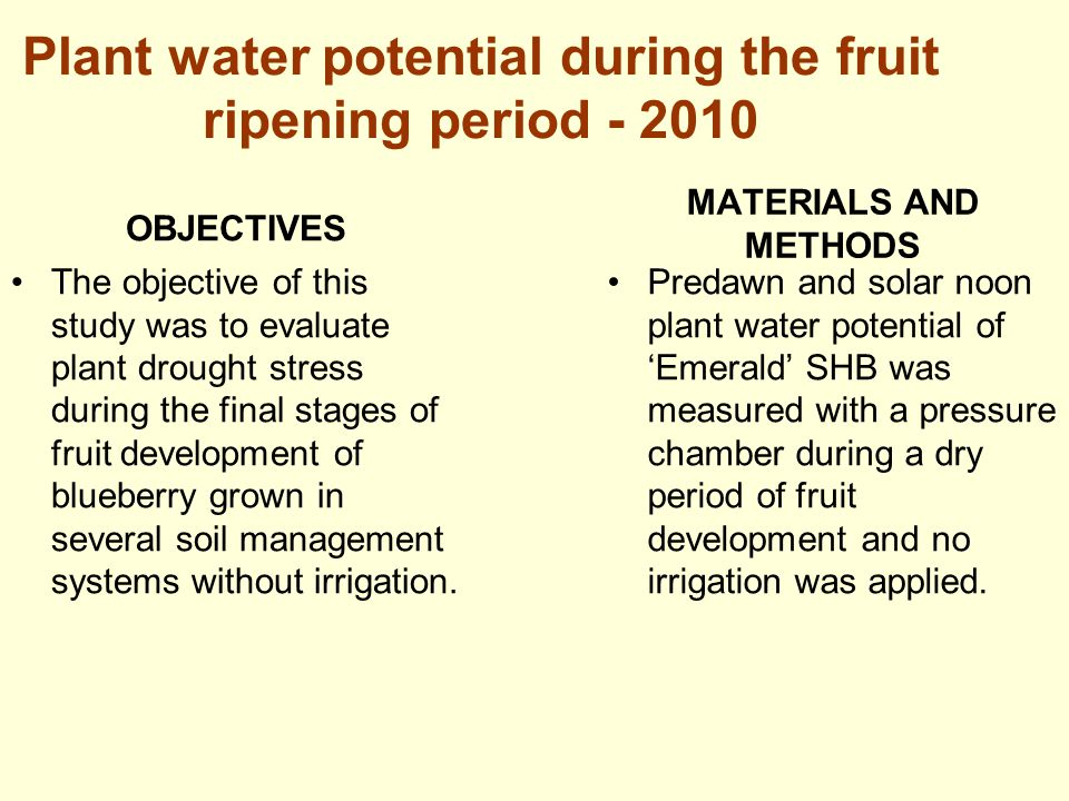 Plant water potential during the fruit ripening period - 2010 OBJECTIVES The objective of this study was to evaluate plant drought stress during the f