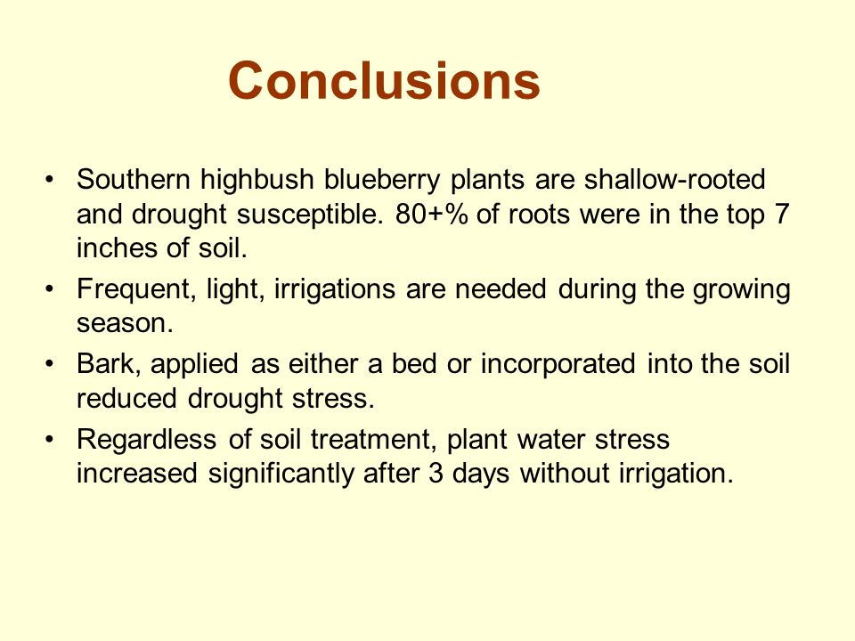 Conclusions Southern highbush blueberry plants are shallow-rooted and drought susceptible. 80+% of roots were in the top 7 inches of soil. Frequent, l