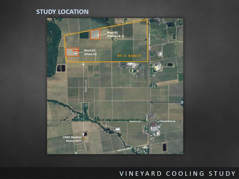 STUDY LOCATION BV2 vineyard in Rutherford