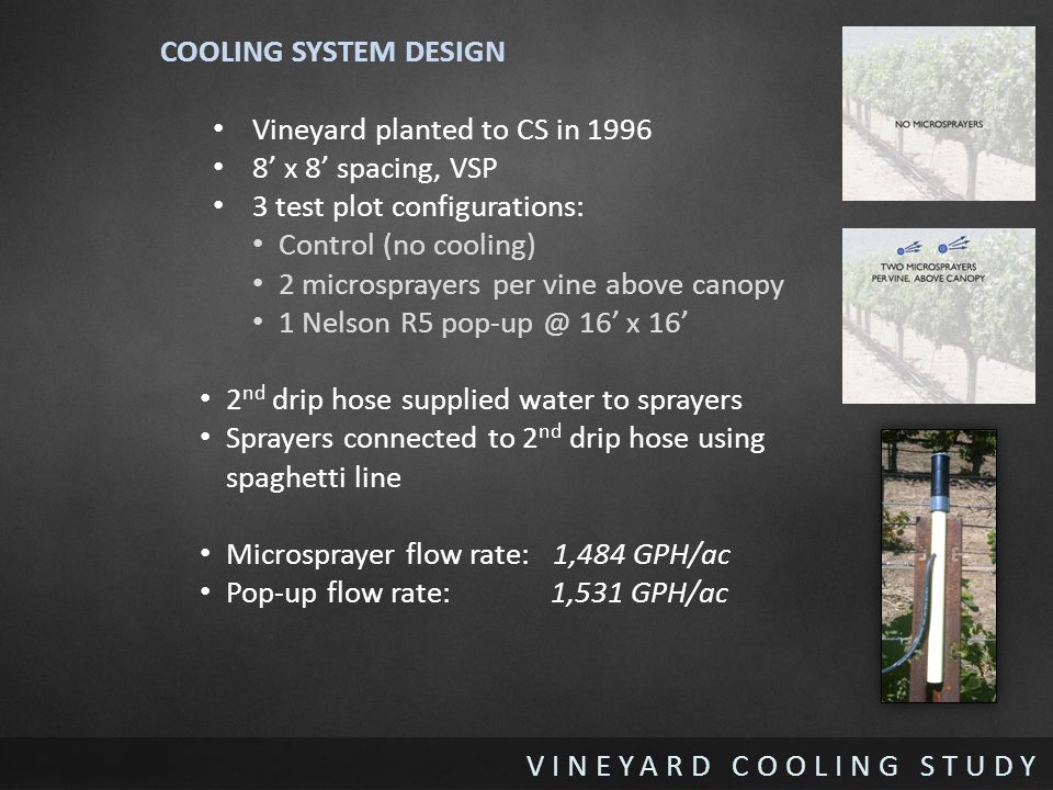 VINEYARD COOLING STUDY COOLING SYSTEM DESIGN Vineyard planted to CS in 1996 8' x 8' spacing, VSP 3 test plot configurations: Control (no cooling) 2 microsprayers per vine above canopy 1 Nelson R5 pop-up @ 16' x 16' 2 nd drip hose supplied water to sprayers Sprayers connected to 2 nd drip hose using spaghetti line Microsprayer flow rate: 1,484 GPH/ac Pop-up flow rate: 1,531 GPH/ac