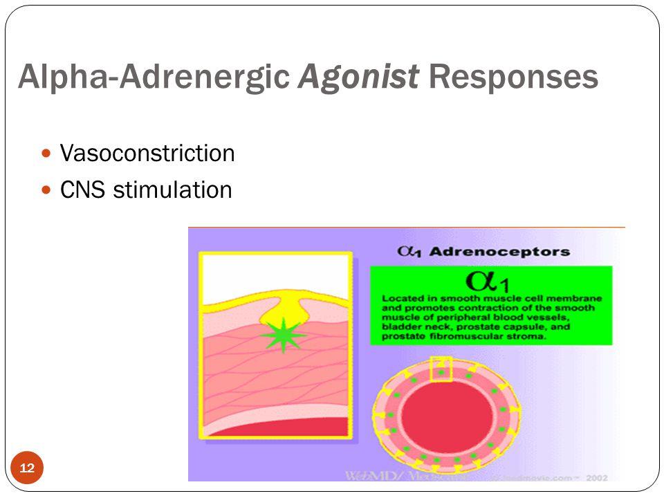 Vasoconstriction CNS stimulation Alpha-Adrenergic Agonist Responses 12