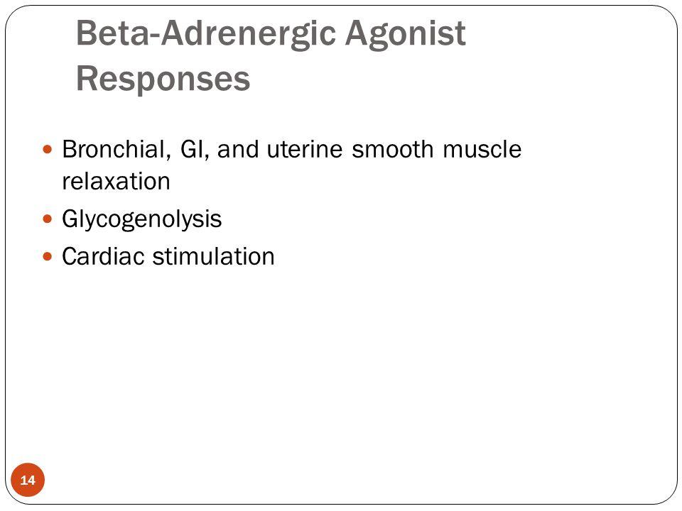 Bronchial, GI, and uterine smooth muscle relaxation Glycogenolysis Cardiac stimulation Beta-Adrenergic Agonist Responses 14
