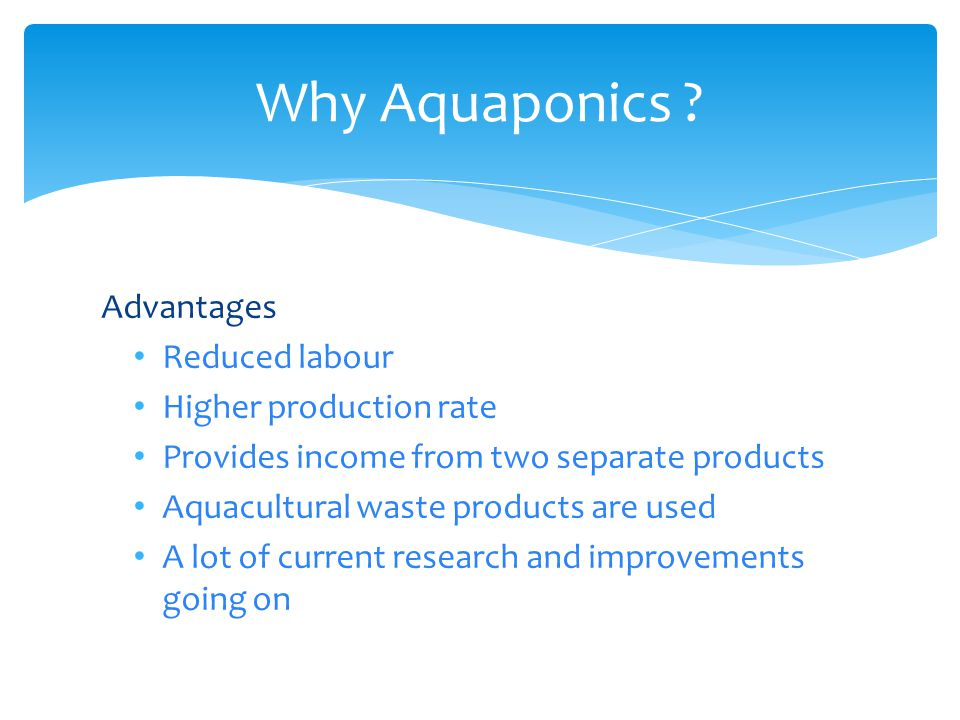 Why Aquaponics ? Advantages Reduced labour Higher production rate Provides income from two separate products Aquacultural waste products are used A lo