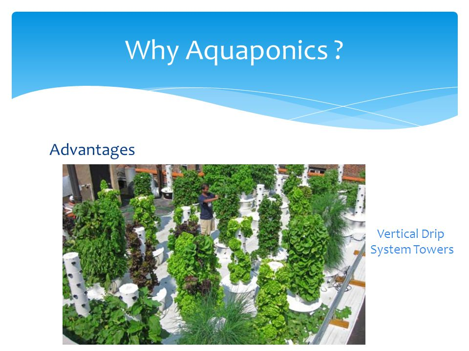 Disadvantages High initial cost  To fill up water tanks  To build the system (Greenhouse, pumps etc.) Requires skill and know-how Constant monitoring of water parameters Pests and diseases can be devastating Limitations concerned with fish species reared Competitive market prices Why Aquaponics?