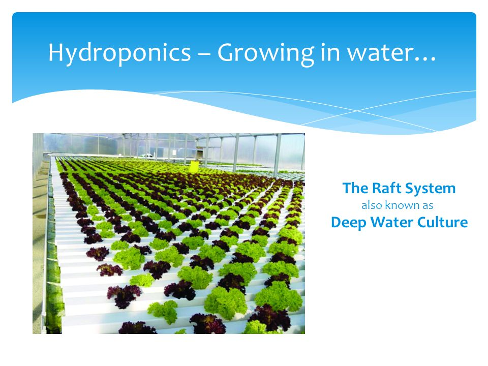 Hydroponics – Growing in water… The Raft System also known as Deep Water Culture