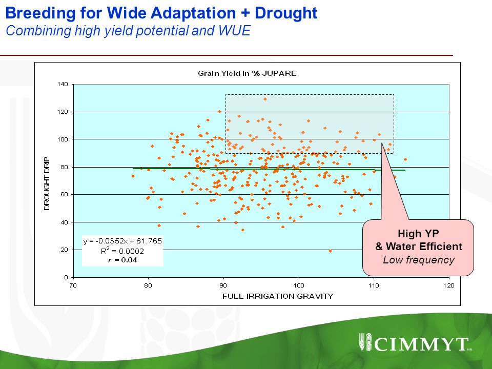 Breeding for Wide Adaptation + Drought Combining high yield potential and WUE High YP & Water Efficient Low frequency