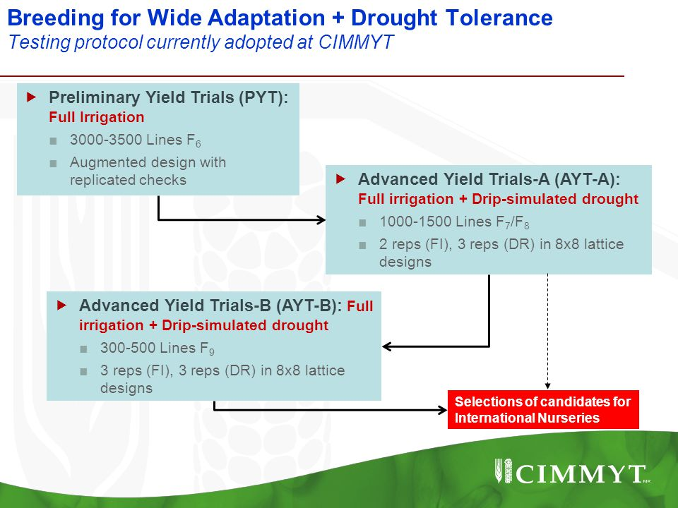 Breeding for Wide Adaptation + Drought Tolerance Testing protocol currently adopted at CIMMYT  Preliminary Yield Trials (PYT): Full Irrigation ■3000-