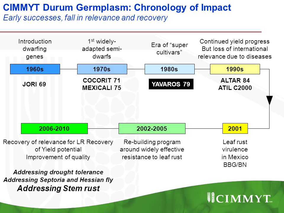 CIMMYT Durum Germplasm: Chronology of Impact Early successes, fall in relevance and recovery Introduction dwarfing genes 1 st widely- adapted semi- dw