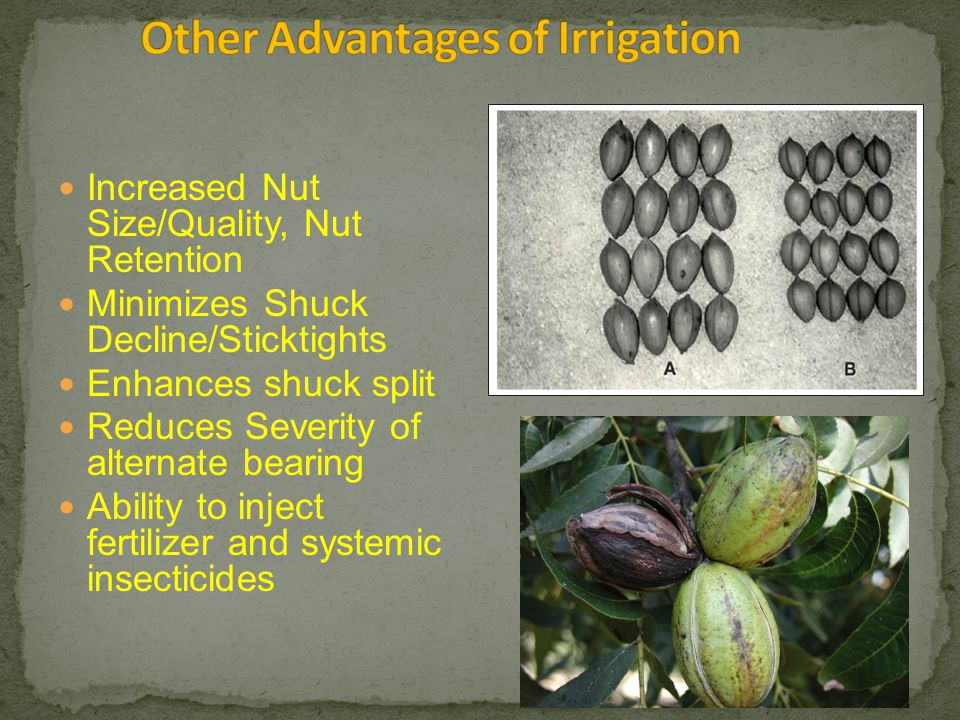 Increased Nut Size/Quality, Nut Retention Minimizes Shuck Decline/Sticktights Enhances shuck split Reduces Severity of alternate bearing Ability to inject fertilizer and systemic insecticides
