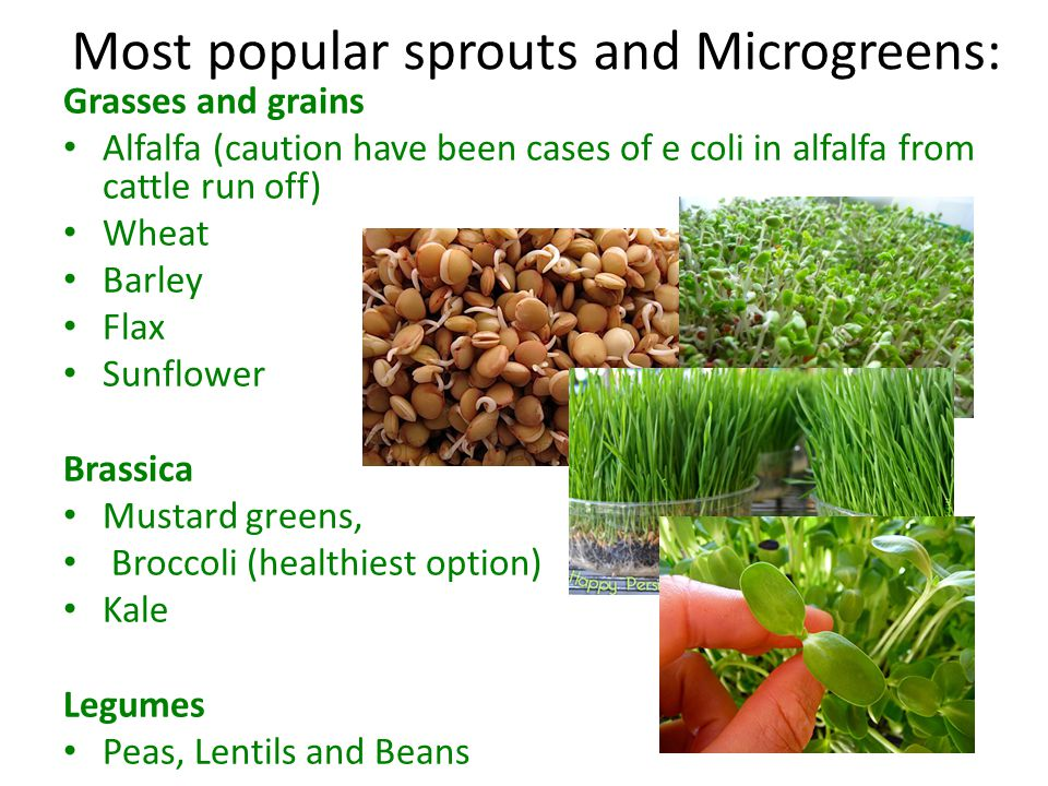 Assignment Next class: Growing sprouts using the jar method