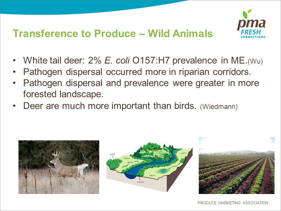 PRODUCE MARKETING ASSOCIATION Transference to Produce – Wild Animals White tail deer: 2% E.